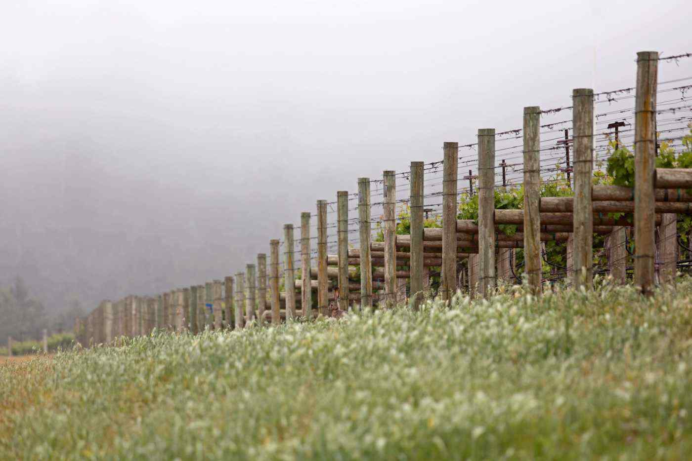 Foggy morning end of rows