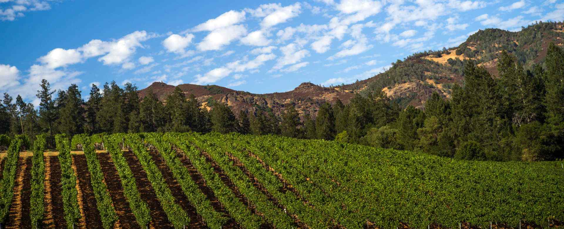 Heimark Vineyard Land