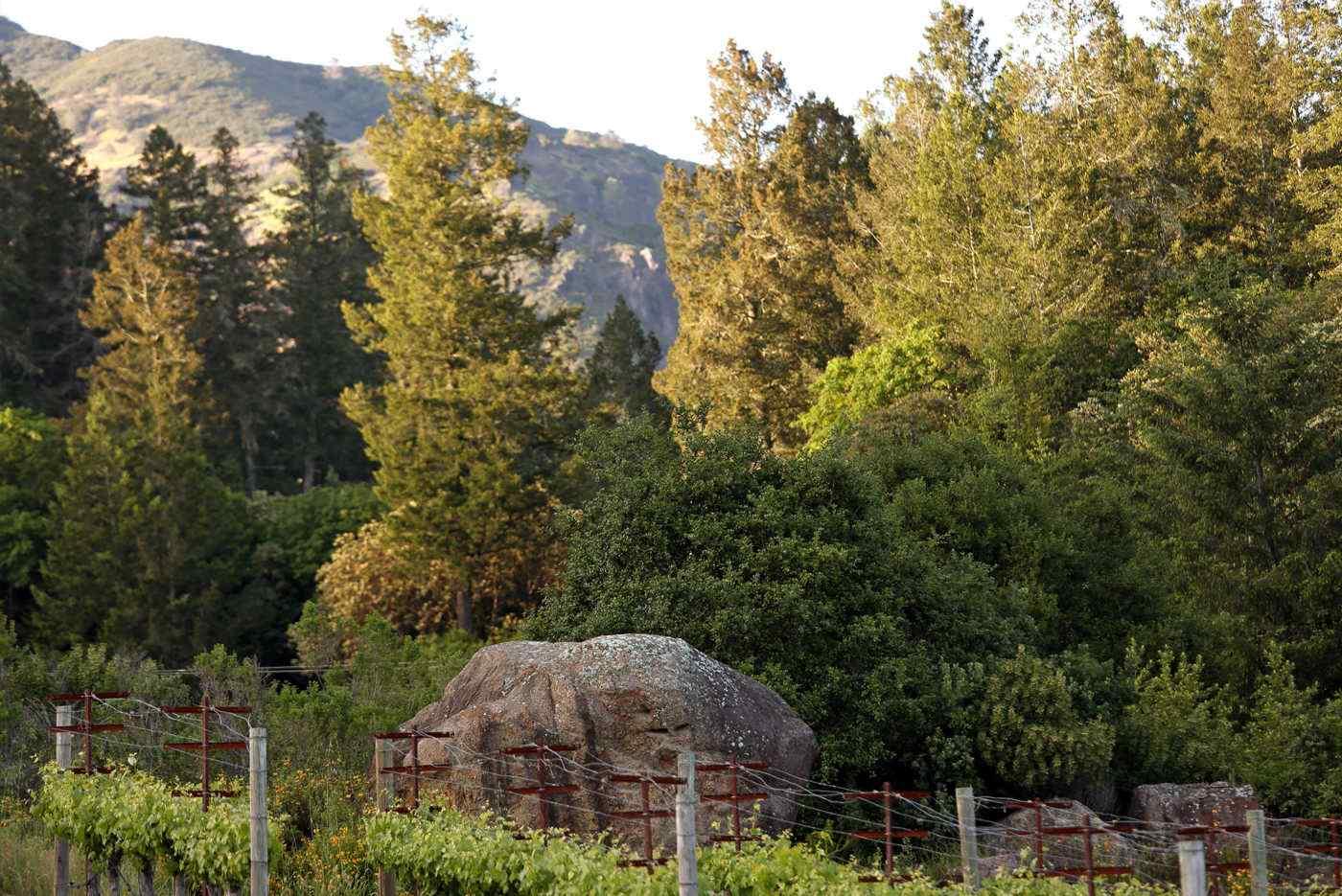 Heimark Vineyard Boulder