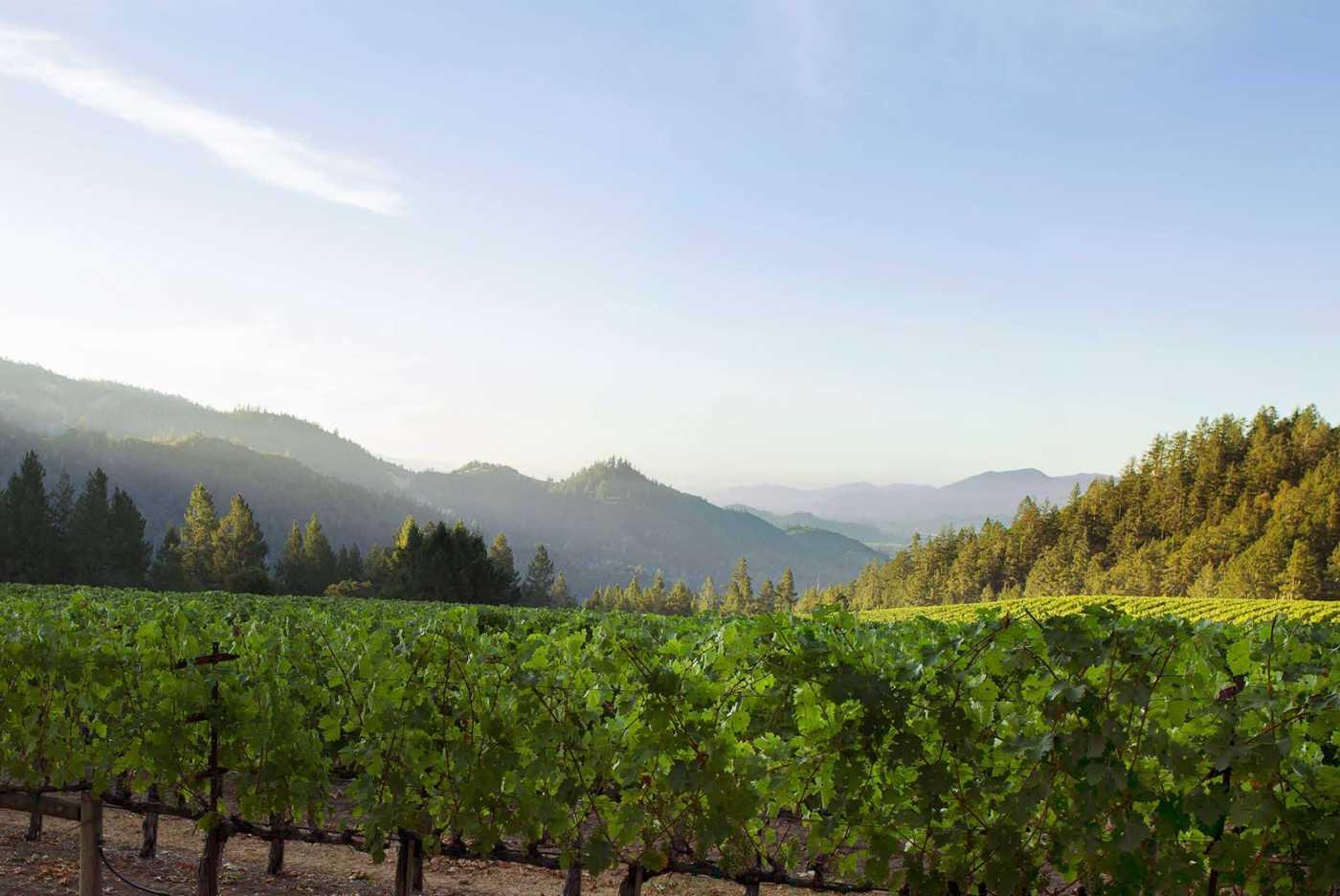heimark vineyard sunset
